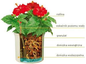 Serwis florystyczny- hydroponika, kwiaty, wystroje biur