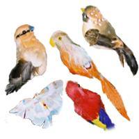 Ptaszki, motylki