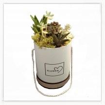 Flower Box sukulent
