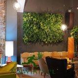 Żywa zielona ściana wertykalny ogród