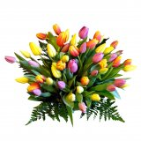 Mixed Colour Tulips