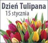 15 stycznia Dzien Tulipana